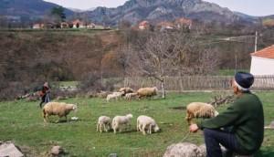 Вицепремијер Србије прогнозира да ће многи остати буквално и без хлеба