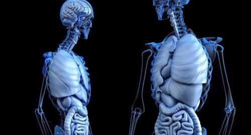 Откривен нови тип крвних судова у костима човека