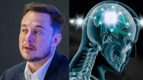 Маск мајмуну уградио чип у мозак и тврди да већ игра видео-игре и да је срећан