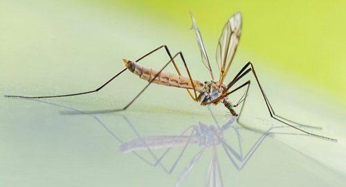 """""""Франкенштајн бубе"""": Летеће ГМО комарци, мештани бесни ― Бил Гејтс подржава """"злочиначки експеримент"""""""