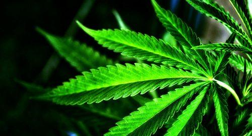 Лончар: Србија ће испоштовати одлуку УН-а, скидамо марихуану са листе